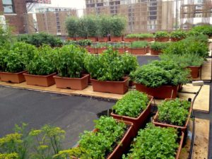 The rooftop garden at Hilton Chicago where herbs and produce are grown and promotes sustainability. Courtesy image