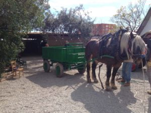 Horse Drawn Wagon at Baracca Toni Montoliu Outside Valencia, Spain