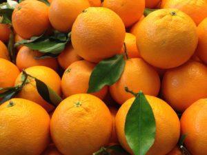 Valencia Spain Oranges