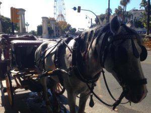 Horse Drawn Carriage Rides in Malaga, Spain
